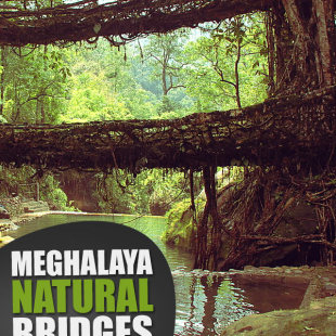 Meghalaya_Natural_Bridges_F