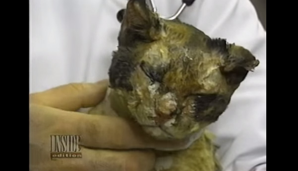 This is Scarlett and when fire fighters found her. She was barely hanging on to her 9th life.