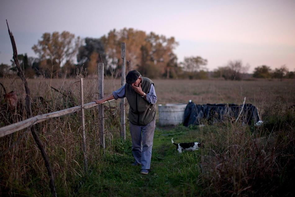"In this April 16, 2013, photo, Felix San Roman walks on his property in Rawson, in Buenos Aires province, Argentina. San Roman says that when he complained about clouds of chemicals drifting into his yard, the sprayers beat him up, fracturing his spine and knocking out his teeth. ""This is a small town where nobody confronts anyone, and the authorities look the other way,"" San Roman said. ""All I want is for them to follow the existing law, which says you can't do this within 1,500 meters. Nobody follows this. How can you control it?"" (AP Photo/Natacha Pisarenko)"