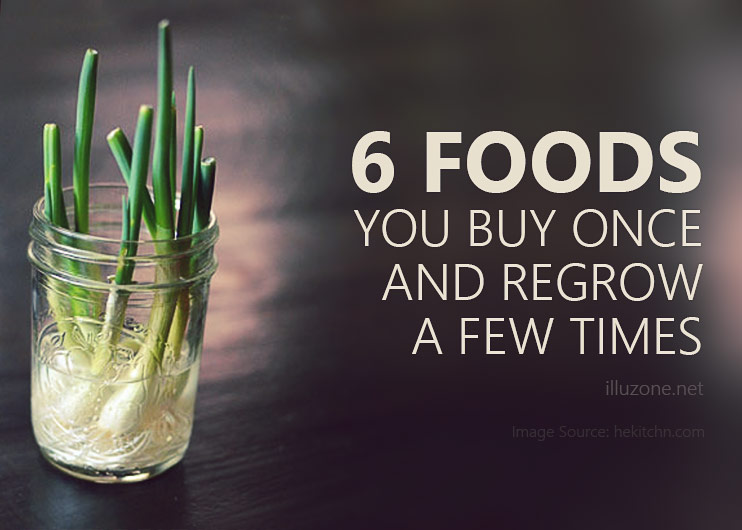 6 Foods You Buy Once And Regrow A Few Times – How to regrow vegetables