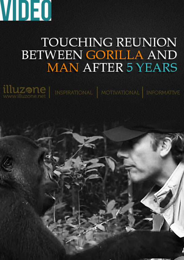 VIDEO | Touching reunion between gorilla and man after 5 years
