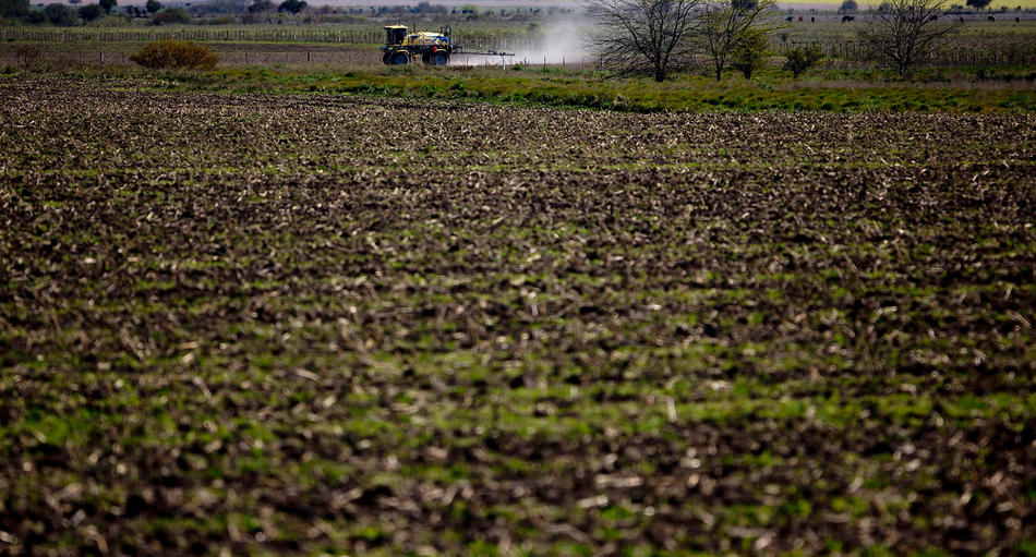 "In this Sept. 24, 2013, photo, a tractor known as a ""mosquito"" dusts a field near Parana, in the Entre Rios province, Argentina. Most provinces forbid spraying next to homes and schools, ranging in distance from 50 meters to as much as several kilometers from populated areas. But The Associated Press found many cases of soybeans planted only a few feet from homes and schools, and of chemicals mixed and loaded onto tractors inside residential neighborhoods. (AP Photo/Natacha Pisarenko)"