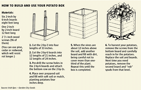 Ho to Grow 100 Pounds Of Potatoes In 4 Square Feet_Potatoes