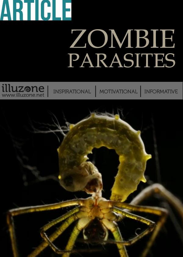 VIDEO | Zombie Parasites