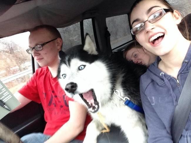illuzone_Animal_Annoyed_Selfie (14)