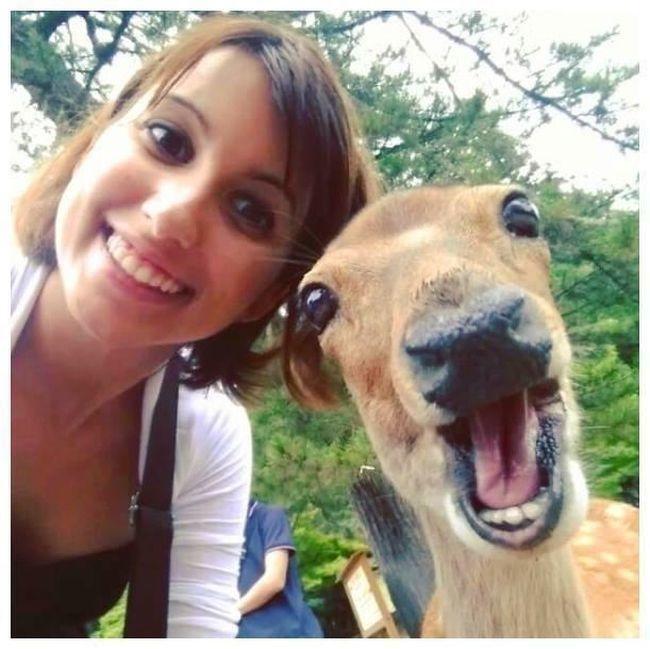 illuzone_Animal_Annoyed_Selfie (2)