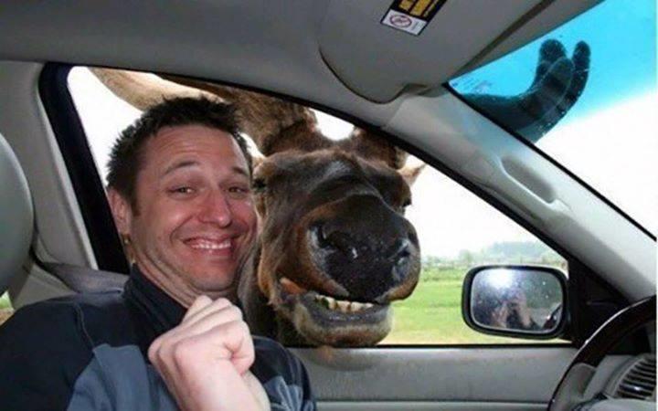 illuzone_Animal_Annoyed_Selfie (20)