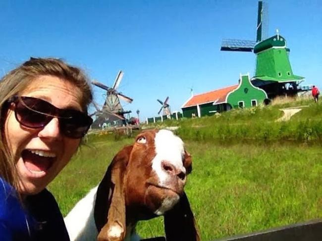 illuzone_Animal_Annoyed_Selfie (23)
