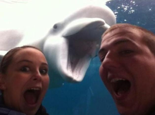 illuzone_Animal_Annoyed_Selfie (8)