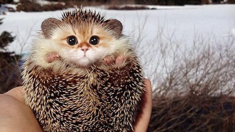 Imagine all animals having cat faces