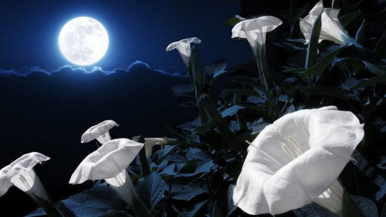 20 night flowers for moon garden