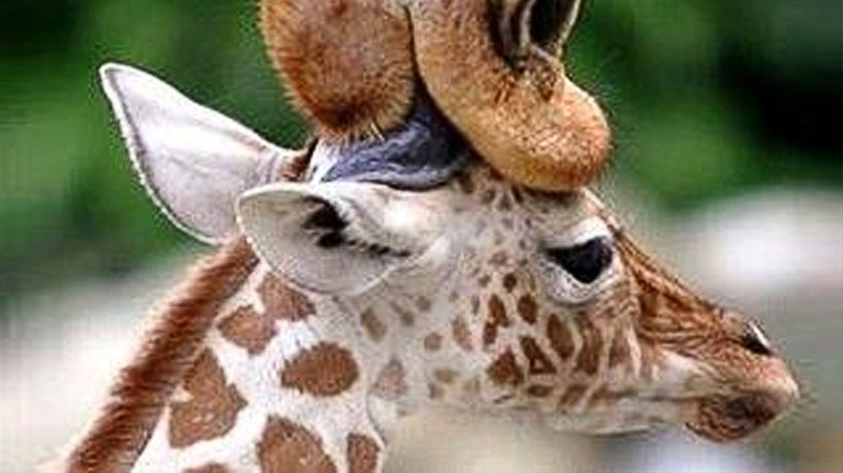 Adorable baby animals with their parents